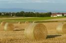 Bilder aus der Landwirtschaft 2011